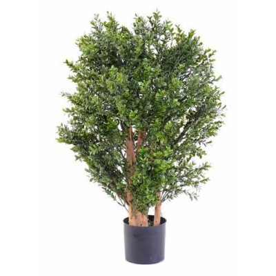 BUIS NEW BUISSON