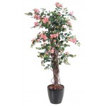 BOUGAINVILLEE NEW LIANES ROSE