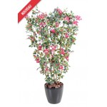 BOUGAINVILLIERS NEW PALISSADE
