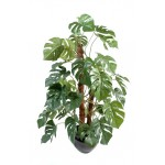 PHILODENDRON TUTEUR COCO